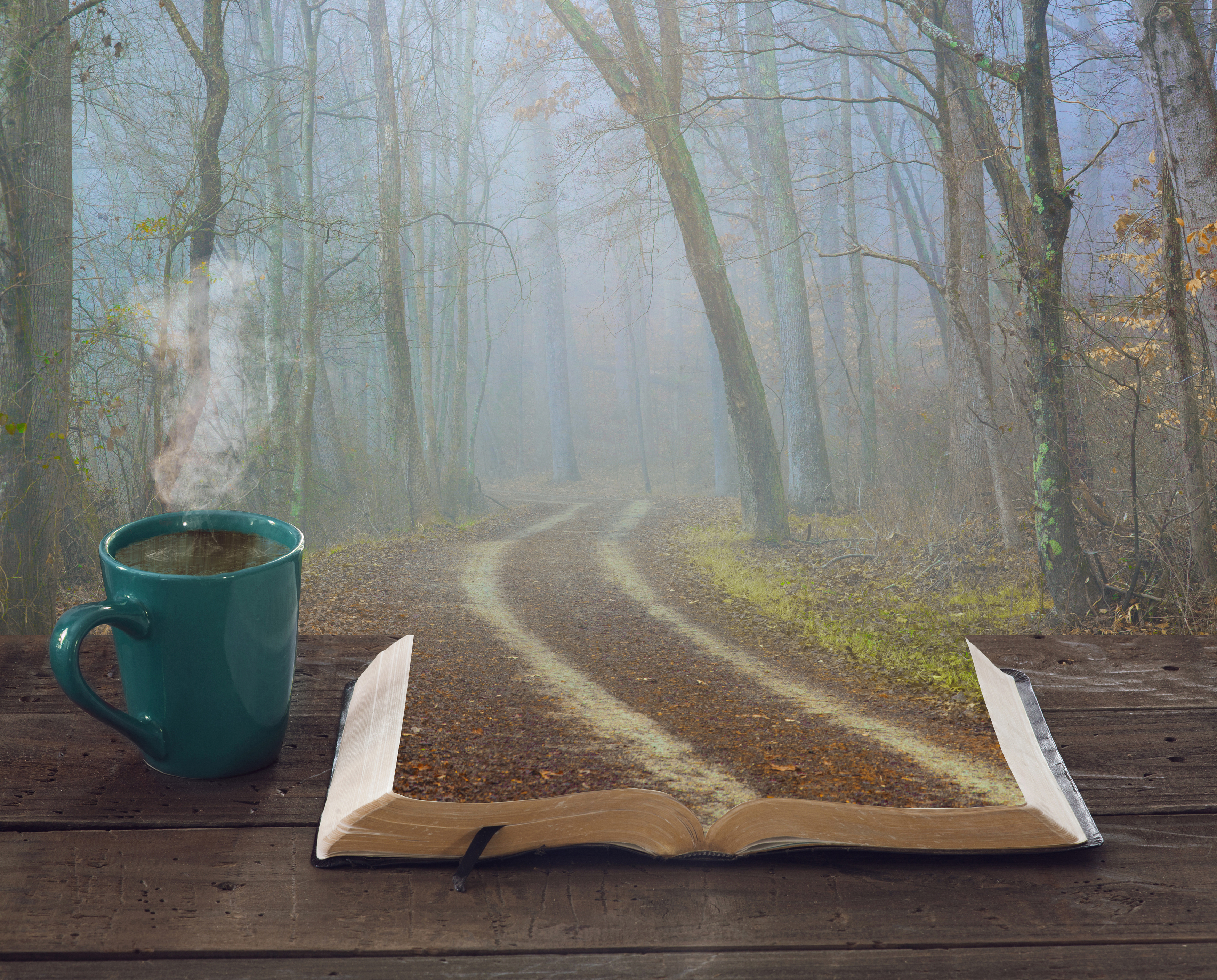 Bible and forest